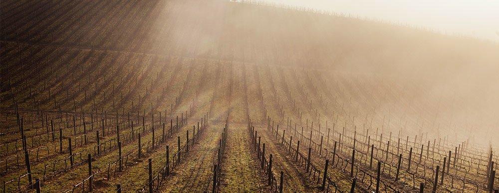 viinilehtifi_viini_0215_douro_sumumaisema_lasse_lecklin_vinjettikuva2