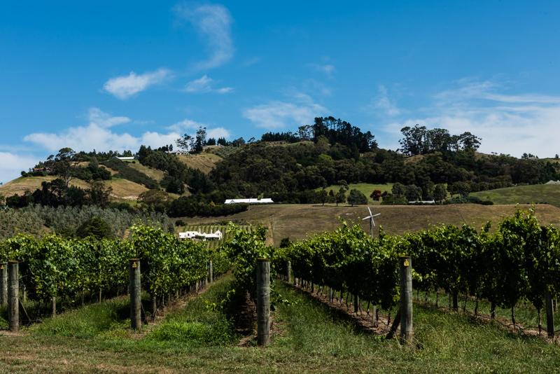 Uusi-Seelanti Hawke's Bay Te Mata viinitila