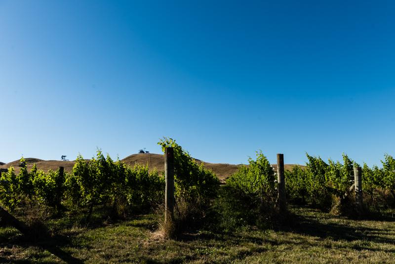 Uusi-Seelanti Hawke's Bay Supernatural Wine Co