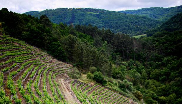 Ribeiro Sacra - maailman kaunein viinialue