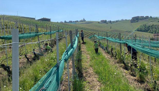 Viinintuottajien koronapäiväkirjat Franco Conterno