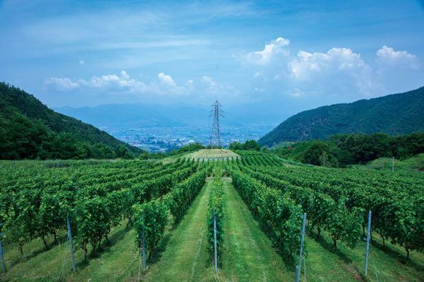 Japani matkalla viinimaaksi