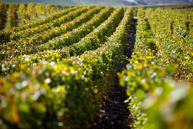 Viinintuottajien koronapäiväkirjat: Pol Roger