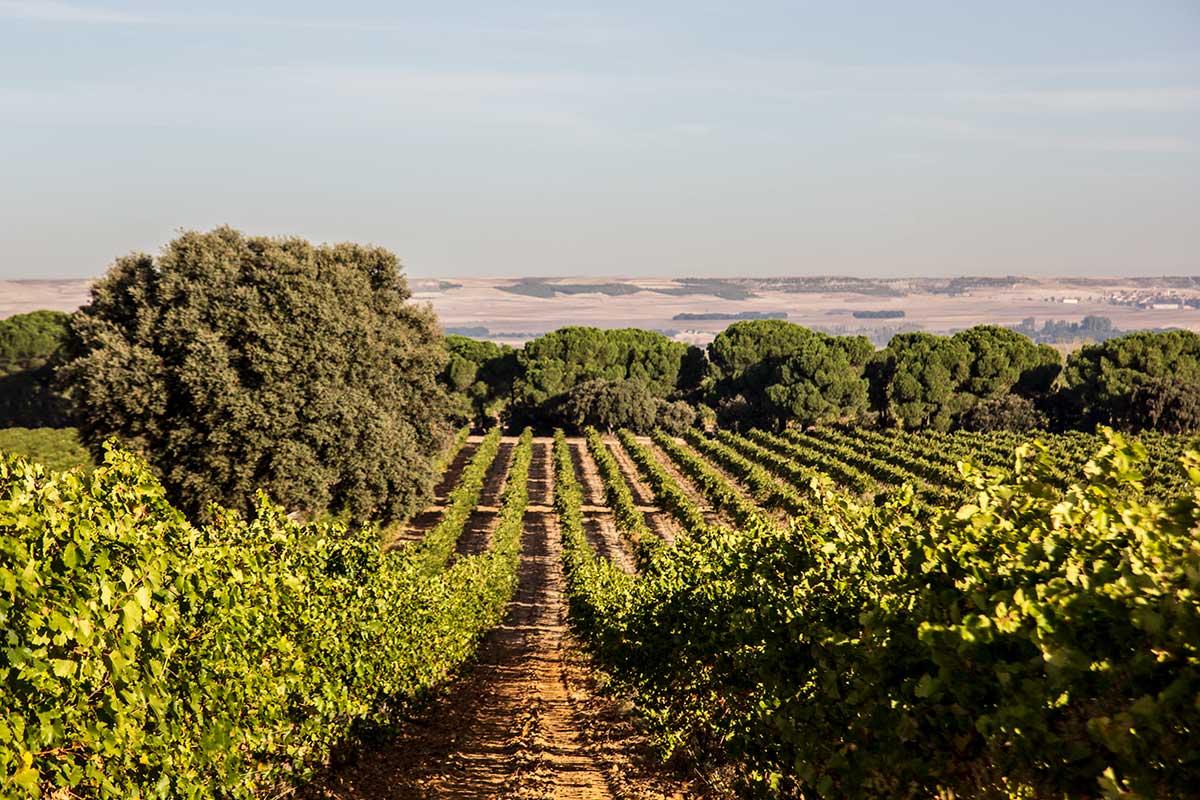 Nyhtöleipä ja verdejo: viini-ilta voi alkaa